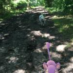 Der Hund treibt mir ein Pokemon vor das iPhone!